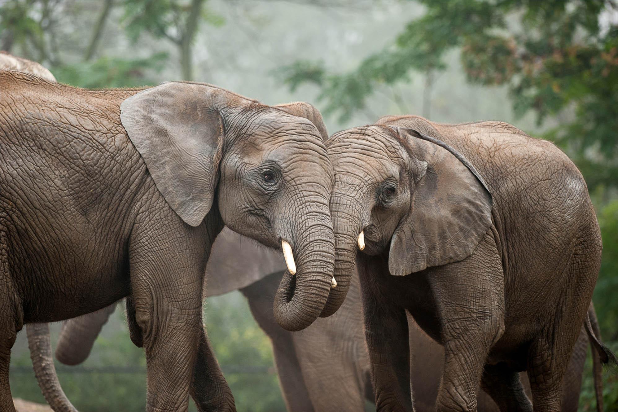 Adopt An Animal   Pittsburgh Zoo & PPG Aquarium