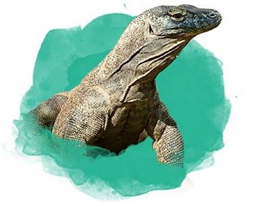 Animal-Category-Reptiles | Pittsburgh Zoo & PPG Aquarium