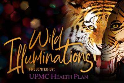 Wild Illuminations